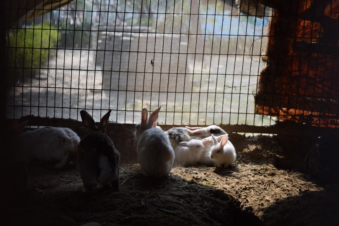 Kaninbur til kanin